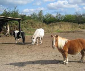 Centre equestre la licorne