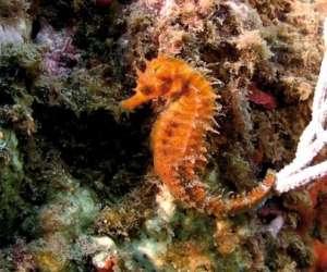 Plongée sous marine à argeles sur mer