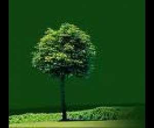 Entretien espace vert