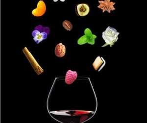 Sophro-degustation de vin
