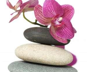 Zen acupuncture - medecine  traditionnelle chinoise