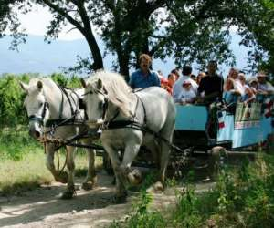Rando cheval & chariot  -tourisme equestre