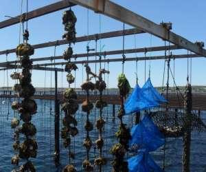 Bleu marin - decouverte en bateau des parcs a huitres