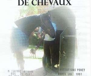 Transport de chevaux 34 association