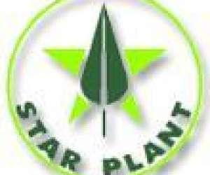 Plantes pour chantiers et jardinerie