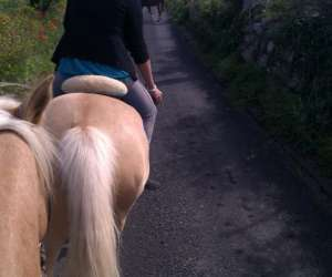 Centre equestre pleine nature