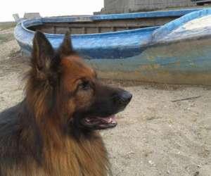 Perpignan education canine