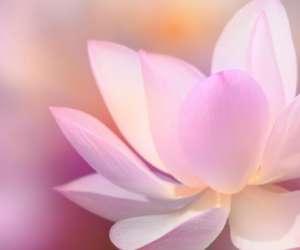 Le lifting energétique coréen par so zen acupuncture