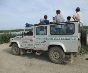 Camargue  safari 4x4 pierrot le camarguais