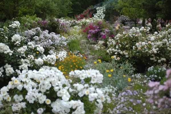 jardin aux plantes parfumees la bouichere limoux 11300. Black Bedroom Furniture Sets. Home Design Ideas