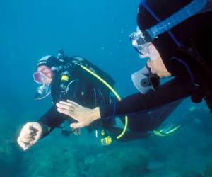 Belouga plongee