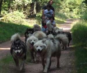 Branches et montagnes: chien de traineau et multiactivi